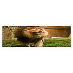 King of the Jungle Bumper Sticker (50 pk)