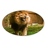 King of the Jungle Oval Sticker