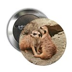 "Meerkats 2.25"" Button (10 pack)"