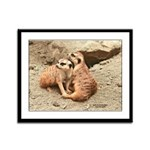 Meerkats Framed Panel Print
