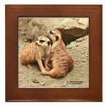 Meerkats Framed Tile
