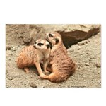 Meerkats Postcards (Package of 8)