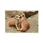 Meerkats Rectangle Magnet (100 pack)