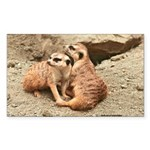 Meerkats Rectangle Sticker 50 pk)