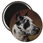 Vintage Great Dane Portrait Magnets