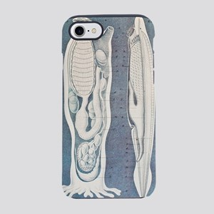 Sea squirt and lancelet, artwo iPhone 7 Tough Case