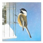 Chickadee on Feeder Square Car Magnet 3