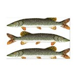 Northern Pike Posters
