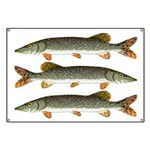 Northern Pike Banner