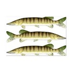 Muskellunge Posters