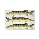 Muskellunge Magnets