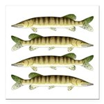 Muskellunge Square Car Magnet 3