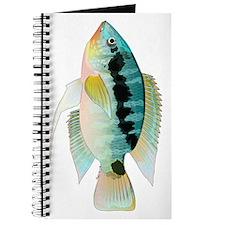 Flag (Festivus) cichlid Journal