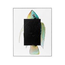 Flag (Festivus) cichlid Picture Frame