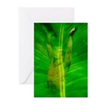 Tropical Male Nude Greeting Cards (Pk of 10)