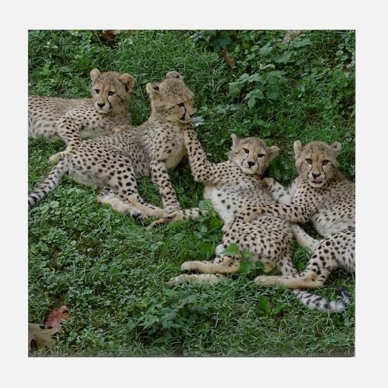 Young Cheetahs Tile Coaster
