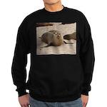Galapagos Islands Sea Lion Sweatshirt (dark)