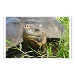 Galapagos Islands Turtle Rectangle Sticker
