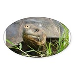 Galapagos Islands Turtle Oval Sticker (10 pk)