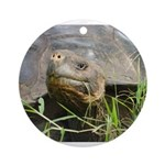 Galapagos Islands Turtle Ornament (Round)
