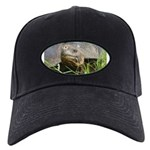 Galapagos Islands Turtle Black Cap