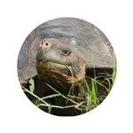 "Galapagos Islands Turtle 3.5"" Button (100 pack)"
