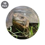 "Galapagos Islands Turtle 3.5"" Button (10 pack)"