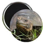 "Galapagos Islands Turtle 2.25"" Magnet (10 pack)"