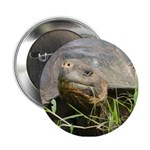 "Galapagos Islands Turtle 2.25"" Button"