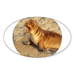 Baby Sea Lion Oval Sticker (10 pk)