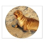 Baby Sea Lion Small Poster