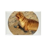 Baby Sea Lion Rectangle Magnet