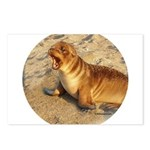 Baby Sea Lion Postcards (Package of 8)
