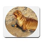 Baby Sea Lion Mousepad