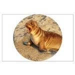 Baby Sea Lion Large Poster