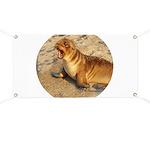 Baby Sea Lion Banner