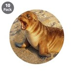 """Baby Sea Lion 3.5"""" Button (10 pack)"""