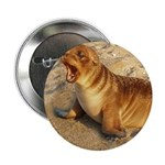 """Baby Sea Lion 2.25"""" Button (10 pack)"""