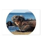 Galapagos Islands Iguana Postcards (Package of 8)