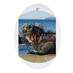 Galapagos Islands Iguana Oval Ornament