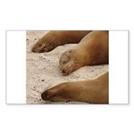 Galapagos Islands Sea Lions Rectangle Sticker 10