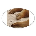 Galapagos Islands Sea Lions Oval Sticker (10 pk)