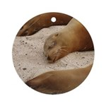 Galapagos Islands Sea Lions Ornament (Round)