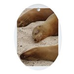Galapagos Islands Sea Lions Oval Ornament