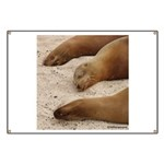 Galapagos Islands Sea Lions Banner