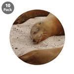 "Galapagos Islands Sea Lions 3.5"" Button (10 pack)"