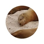 "Galapagos Islands Sea Lions 3.5"" Button"