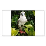 Galapagos Islands Red Footed Rectangle Sticker