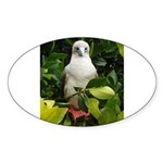 Galapagos Islands Red Footed Oval Sticker (10 pk)