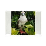 Galapagos Islands Red Footed Rectangle Magnet